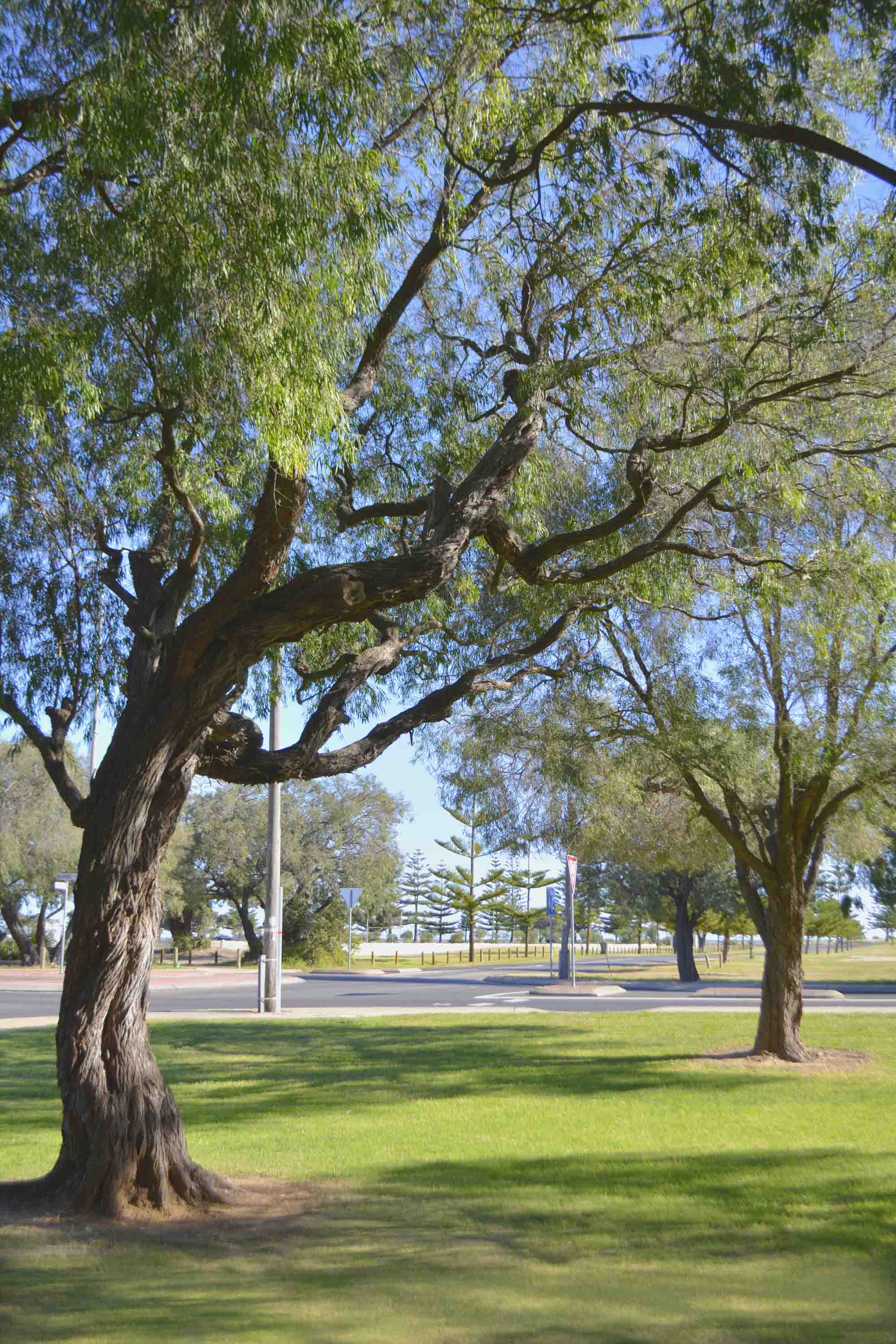 Powered Site (2 Adults) | Busselton Jetty Tourist Park